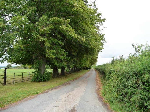 Lane to Lydes Farm