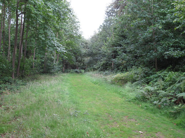 Footpath in Great Martin's Hill Wood