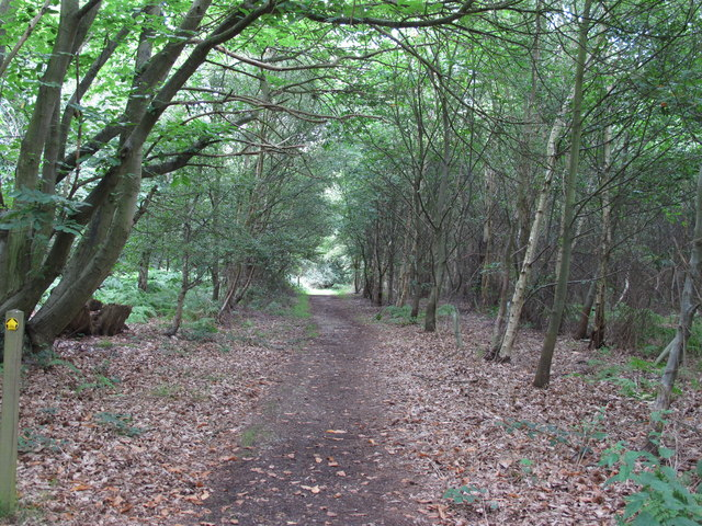 Path in Dodnash Wood