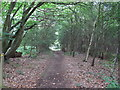 TM1035 : Path in Dodnash Wood by Roger Jones