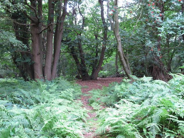 Dodnash Wood