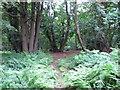 TM1035 : Dodnash Wood by Roger Jones