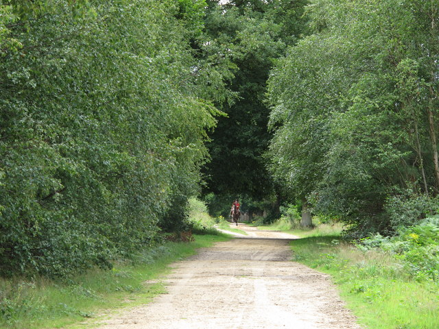 Bridleway in Holly Wood