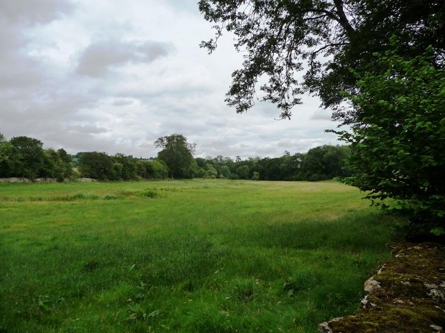Tree-lined meadow near Coulsty Barn