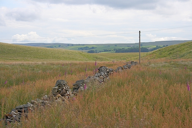 Wall, Ingman Lodge Rough Pasture