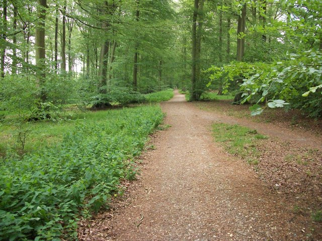Chalk Track in Common Wood