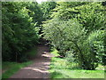 TQ4197 : Path through Epping Forest by Malc McDonald