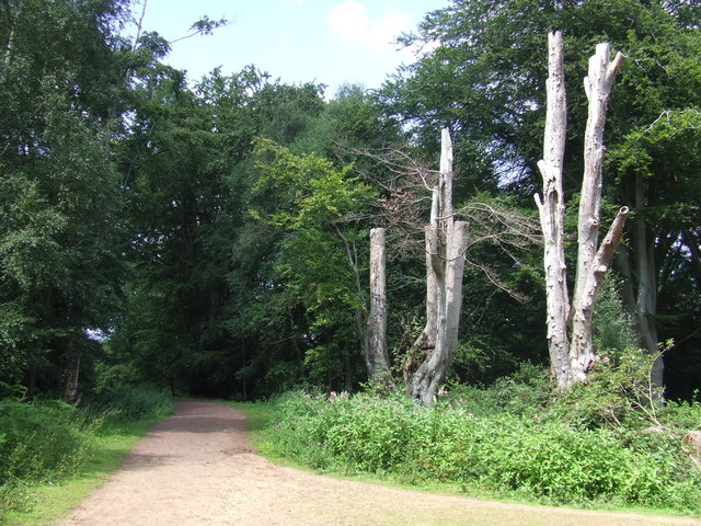 Path in Epping Forest