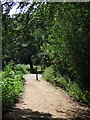 TQ4299 : Path in Epping Forest by Malc McDonald