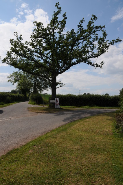 Oak tree on a road junction