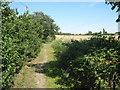 TQ4869 : Chapman's Lane (track) by David Anstiss