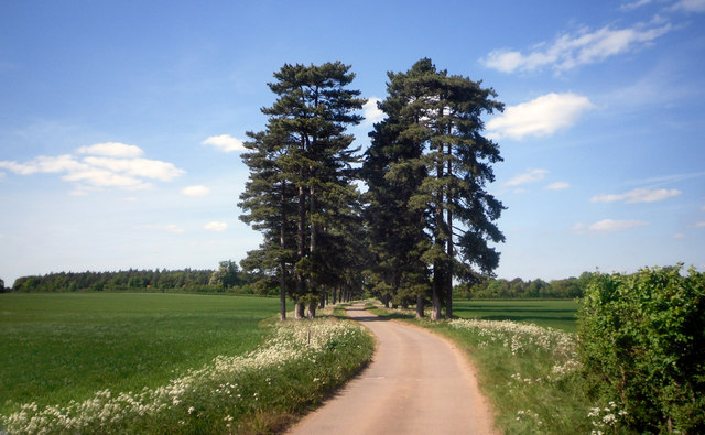 Pine Avenue near Buckland