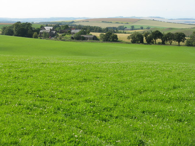 Clover field at Nunraw