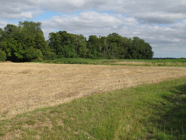 Looking towards a small wood from Dazeley's Lane