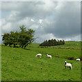 SN7375 : Hill pasture south of Devil's Bridge, Ceredigion : Week 30