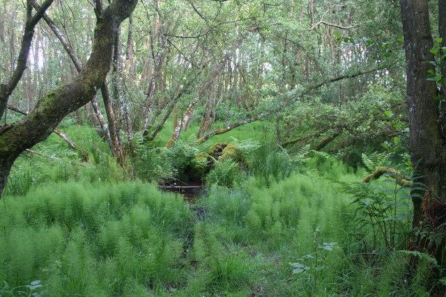 Denwood Bog