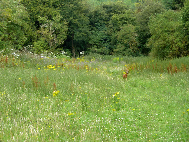 A roebuck on the grassy bank