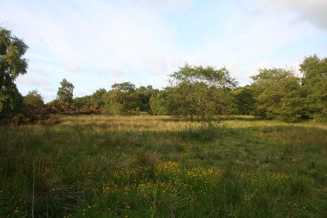 Denwood  Wetland