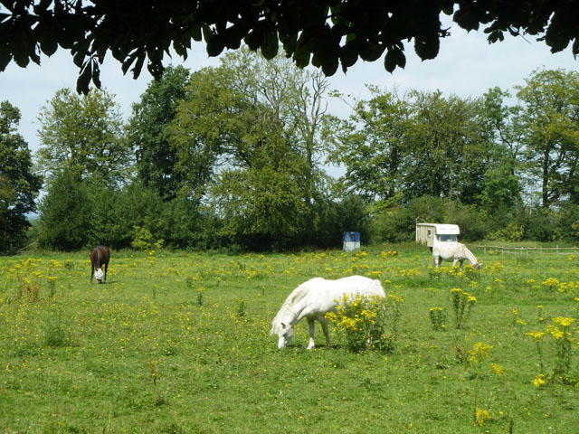 Grazing between the Ragwort