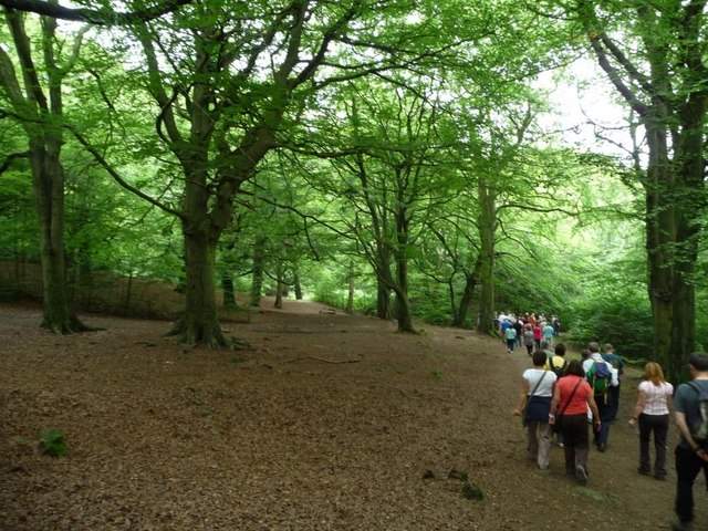 Walking under the beeches, Judy Woods