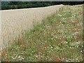 SU3739 : Wildflowers growing along a field headland, north of Fullerton by Stefan Czapski