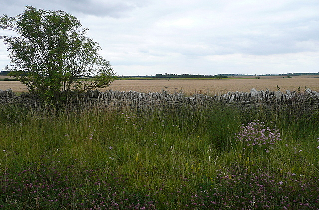 Farmland near Hollow Fosse Farm