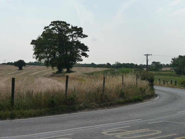 Two trees at a bend, Santingley Lane