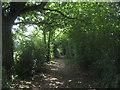 TQ4561 : Bridleway near Snag Farm by David Anstiss