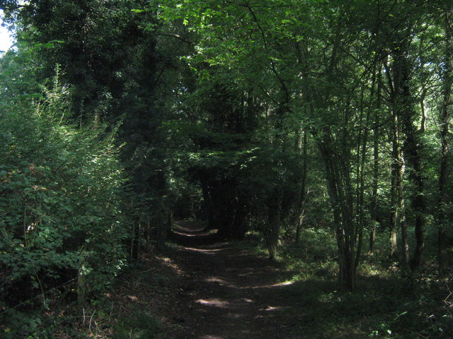Byway in Great Molloms Wood