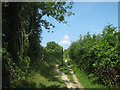 TQ4462 : Footpath beside Cudham Lane North by David Anstiss