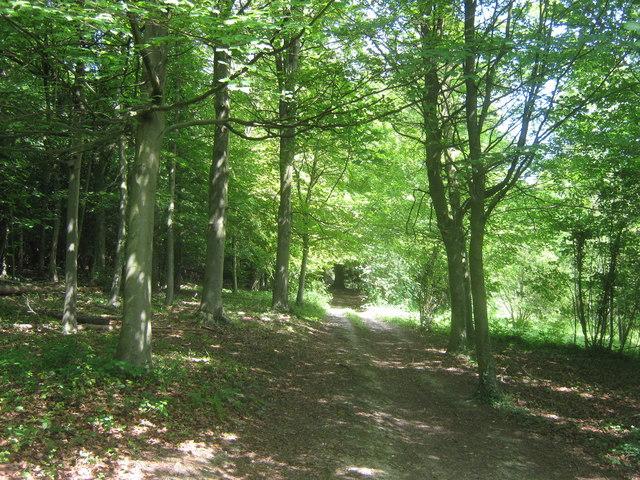 Track in Cuckoo Wood