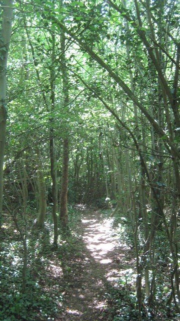 Footpath in Black Bush Wood