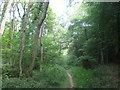 TQ4260 : Footpath in Snotsdale Wood by David Anstiss