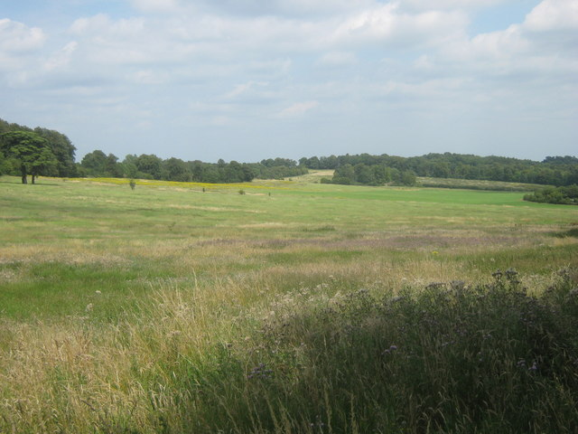 Meadow near Highwood