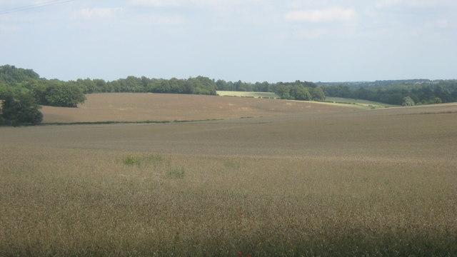 Fields near Bogey Lane