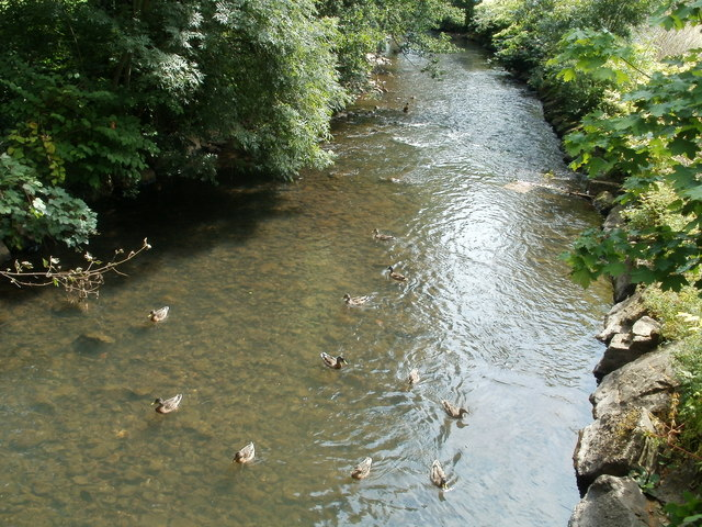 Ducks on the Afon Lwyd, Cwmbran Boating Lake