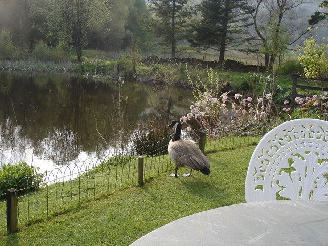 Pond behind the Drunken Duck inn