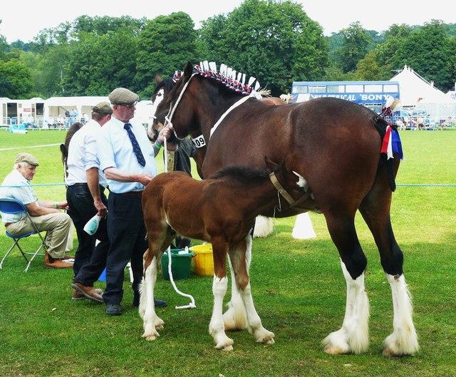Horses at Thornton Le Dale Show