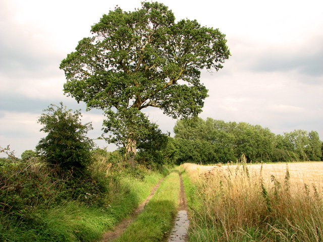 Bridleway south of Hall Common, Ludham