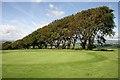 NT0392 : Saline Golf Course : Week 31