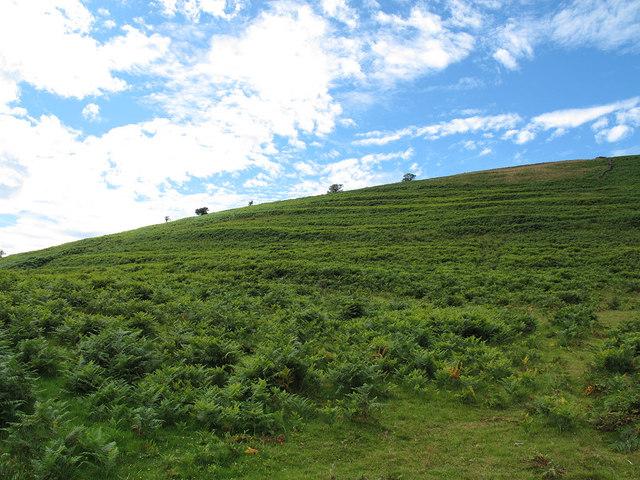 Lynchets near Challacombe