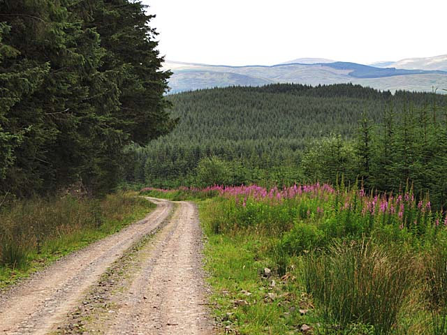 Forestry track on Shiel Rig near Middlegill