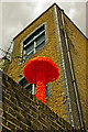 TQ3784 : Bright orange toadstool, Hackney Wick by Julian Osley
