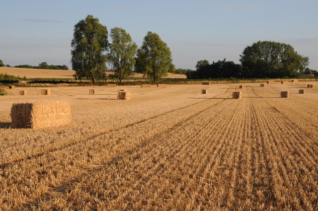 Large square straw bales