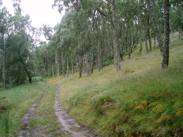 Birch woods near Leakin