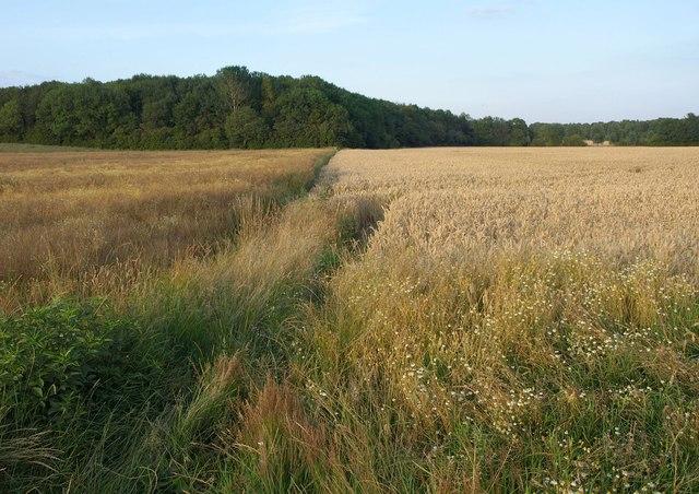 Low Field