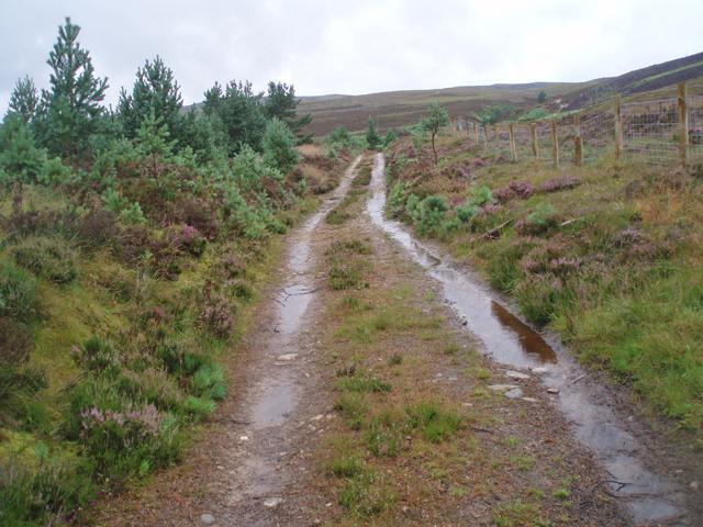 Track near Clashindarroch