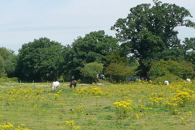 Pasture at Broadwater