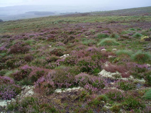 Moorland, Hill of Slackmore