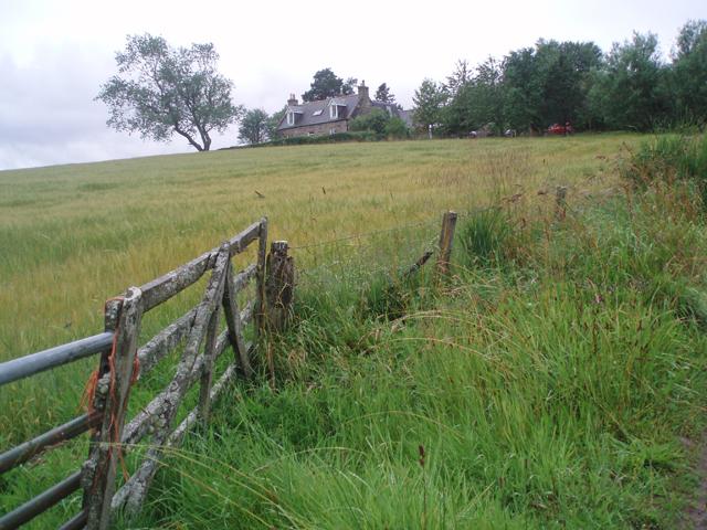 Barley field at Garlinemore